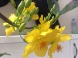 Tổng hợp 2 cách làm hoa mai vàng bằng giấy nhún và vải dạ nỉ