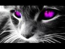 Самые красивые кошки в мире ТОП 10 красивых животных Top 10 Beautiful Animals