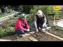 Ранние посадки: редис, морковь, лук. Весенние работы Серия 7