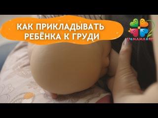 Соски у женской груди большие или маленькие