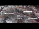 Proyecto del túnel que unirá zona centro norte de Chile y Argentina a través de la cordillera