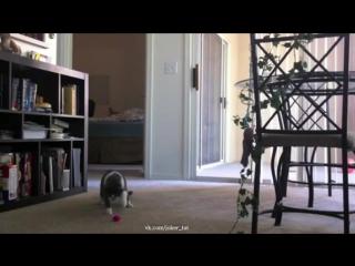 Пугливый кот и музыкальная мышка