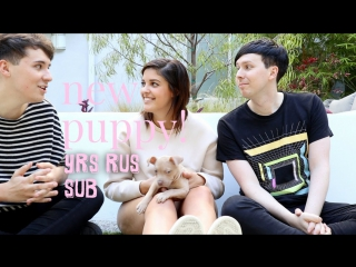 Dan and Phil Play with My New Puppy!!! rus sub