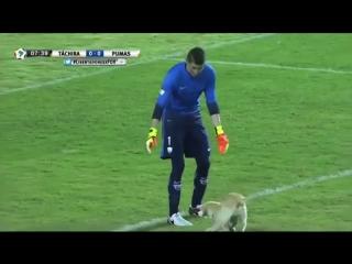 Собака сорвала футбольный матч, выбежав «играть» на поле