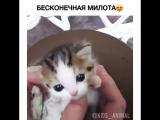 милота! :3