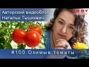 Озимые томаты