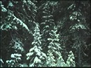 Власть Соловецкая - Свидетельства и документы - 1988