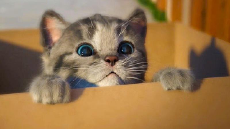 МОЙ Маленький КОТЕНОК СИМУЛЯТОР котика как мультик видео для детей виртуальный ...