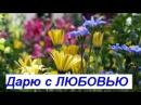 Моим любимым друзьям дарю красивые цветы и музыку Bluf - Save me [NCS Release] [Dance]