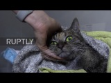 Long live the Dusya! Vets save iconic Hermitage cat after fire at Winter Palace