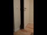 Мурчик3 (кот открывает дверь)