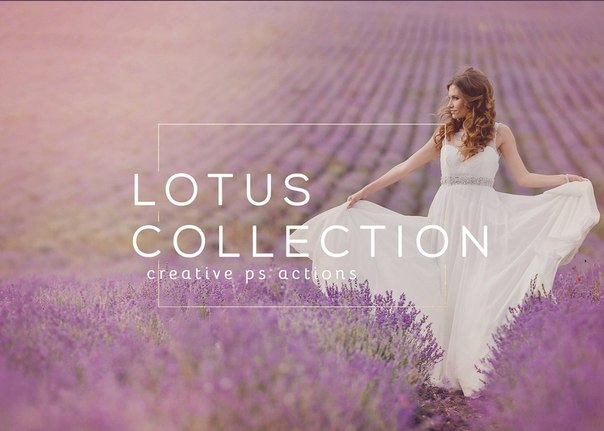 SSC-Lotus_Collection.atn