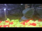 Шурика унесло!!! Плюс Наш аквариум