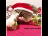 жадный новогодний кот