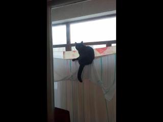 Мой кот нинзя :D