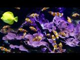 Красивый аквариум. Релакс))