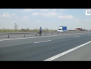 Собака спасена с автострады