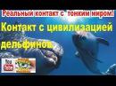 Контакт с цивилизацией дельфинов.