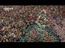 Aerial shooting : Human Buildind - Castellers (Spain)