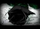 🌹 Тимур СПБ - Чёрная роза 2017 🌹