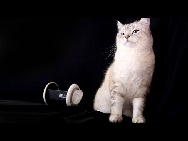 АСМР Кот кушает 😻 ASMR cat Eating, Ear Licking 👅