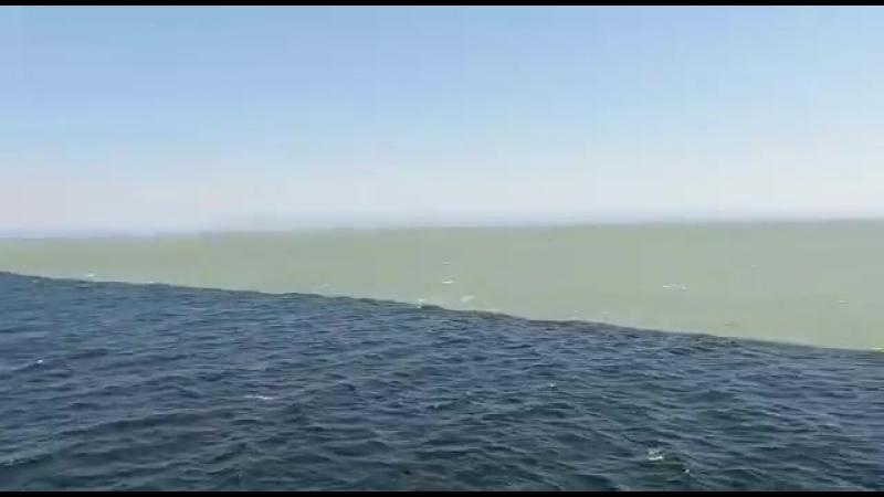 Соленая и пресная вода...Тихий океан и Аляскинский залив. Кто был тот поймет!