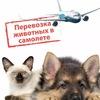 Доставка домашних животных в любую точку мира