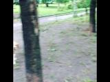 Ураган в Москве 29.05.2017 последствия