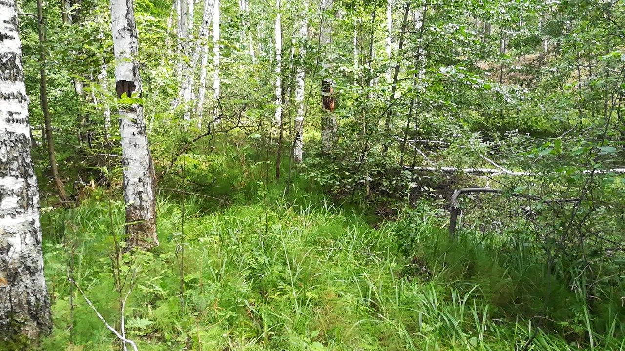 Грибной лес 2017 - Зауралье Курганская область
