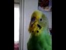 Video-2014-04-08-12-33-