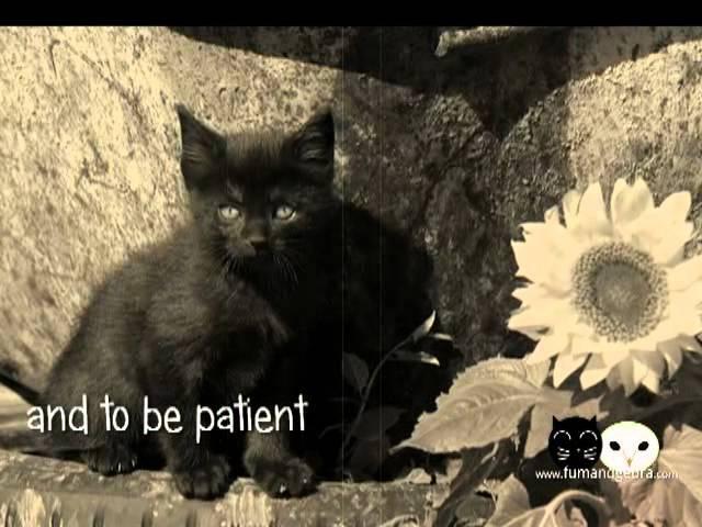 The Beginnings - How Fum Gebra met - cat and owl friendship