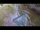Stocking My Native Tank With My Crayfish Trap &amp Dip Net in Murphy's Run