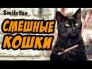 Приколы с Котами ДО СЛЁЗ Смешные Кошки 2017