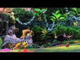 Лемуры Мадагаскара во всей красе!