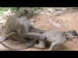 Monkey want to do Mother monkey, baby monkey, teenage monkey