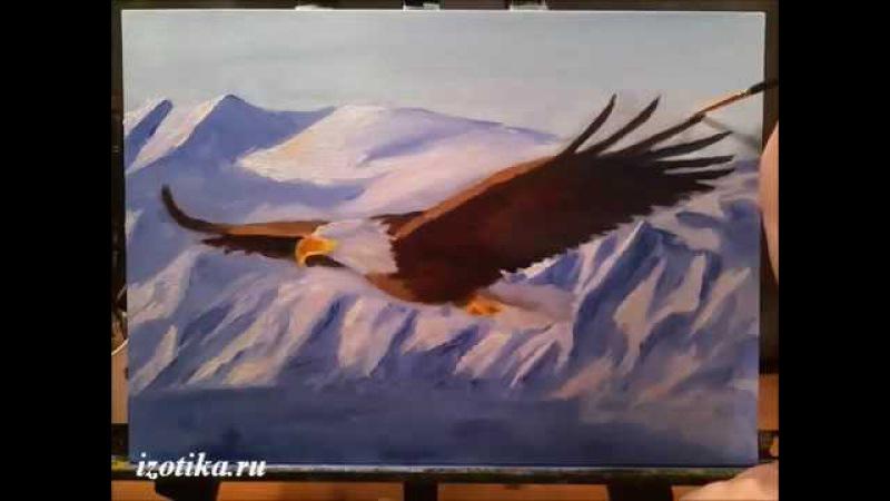 Летящий орел. Масло