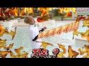 [방탄소년단] 사차원 김태형 체험하기 1탄 (부제 - 빙구미) BTS V eng sub