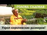 Голова садовая - Укроп королевских размеров!