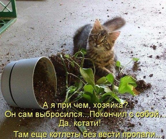 коты и цветы - Страница 2 PEPJVmVbg94