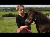 Shetland pony with dwarfism finds fame