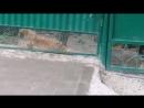 собака очень злая ))))
