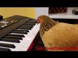 Курица из США исполнила национальную патриотическую песню
