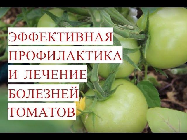Болезни Томатов. Эффективная Профилактика и Лечение Болезней Томатов.