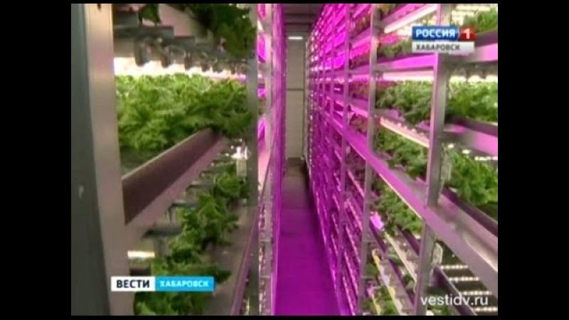 Вести-Хабаровск. Завод по выращиванию зелени без солнечного света и грунта
