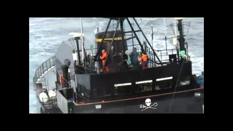 Sea Shepherd's vessel the Steve Irwin of 'Whale Wars' collides with a Japanese kill ship
