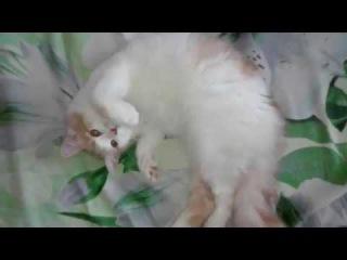 Кот и валерьянка Не оставляйте таблетки на видном месте Коты
