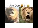 Worlds First Singing Lion Duet