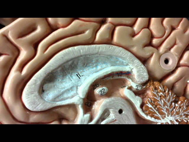 PINEAL GLAND DECALCIFICATION Meditation Binaural Beats Frequency Music (WARNING VERY POWERFUL!)
