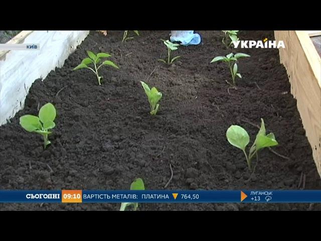 Киянам пропонують розбити власну грядку у дворі Києво-Могилянської академії
