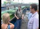 Domashnij akvarium 14 serija iz 18 Cikl programm otkryvaja aziju 2009 XviD TVRip